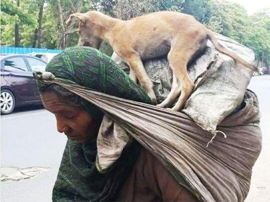عاملة مهاجرة هندية تحمل حيوان أليف متعب على كتفيها