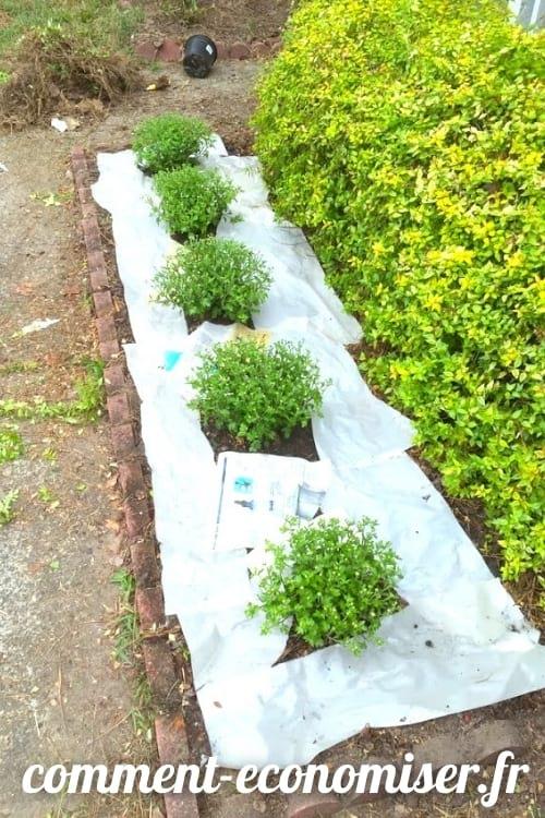 استخدم الجرائد لقتل الأعشاب الضارة.