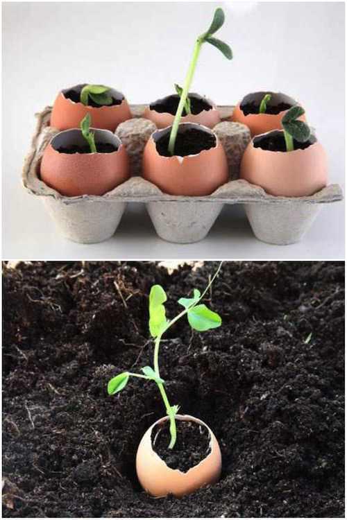 استخدم قشر البيض لزراعة البذور