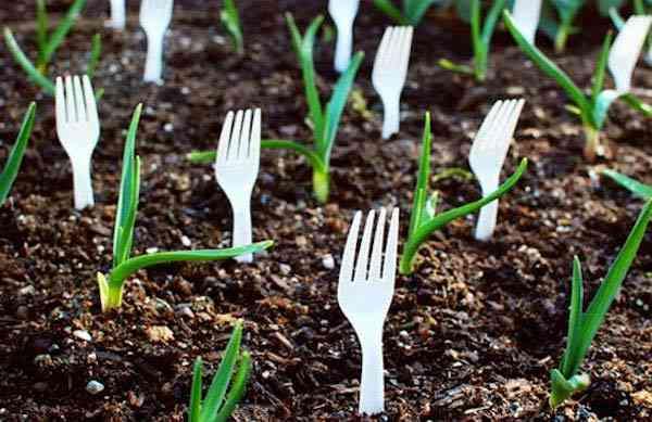ضع شوكات بلاستيكية في التربة للعثور على براعمك الصغيرة