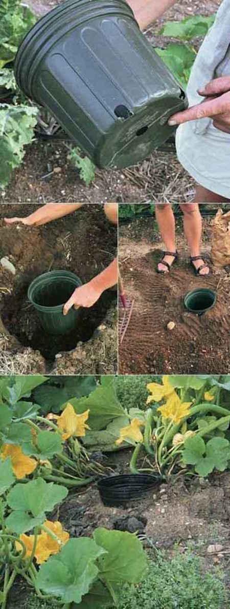 زراعة الاسكواش بسهولة