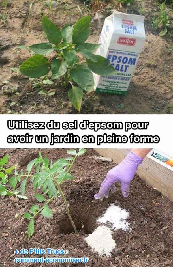 استخدم ملح إبسوم لحديقة صحية