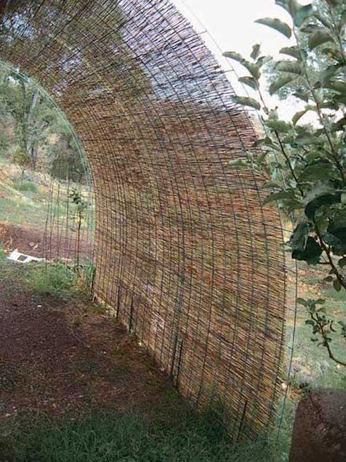 قصب القصب على شبكة سلكية سياج