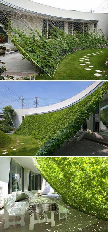 شبكة تتسلق عليها النباتات لتوفير الظل