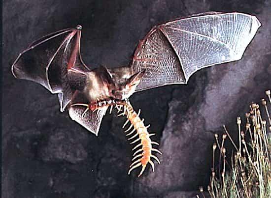مفيدة حديقة الخفافيش