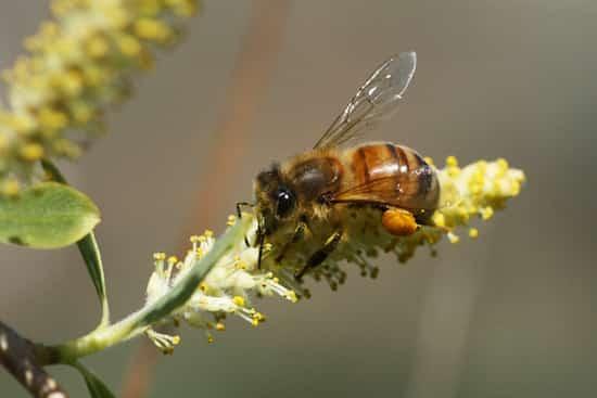 حديقة لقاح النحل مفيدة