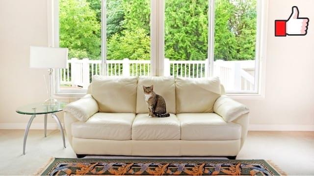غرفة جلوس بها أريكة بيضاء فائقة النقاء بفضل هذا الروتين اليومي