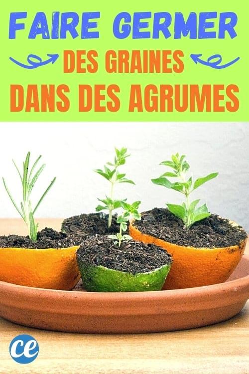 قشر البرتقال وقشر الليمون التي تعمل كمنبات البذور