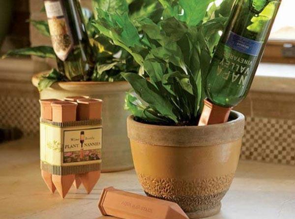 نباتات زجاجة بالتنقيط