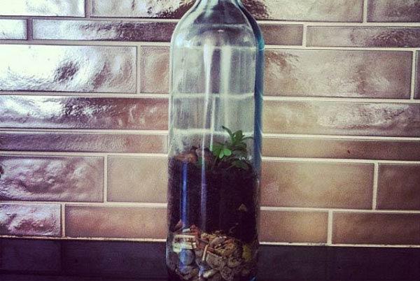 زجاجة حديقة صغيرة