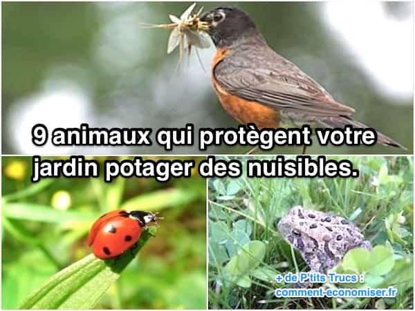 9 حيوانات لحماية حديقة الخضروات من الآفات
