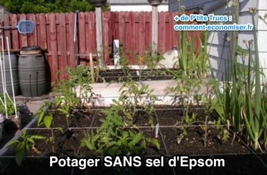 مثال على حديقة نباتية بدون استخدام ملح إبسوم