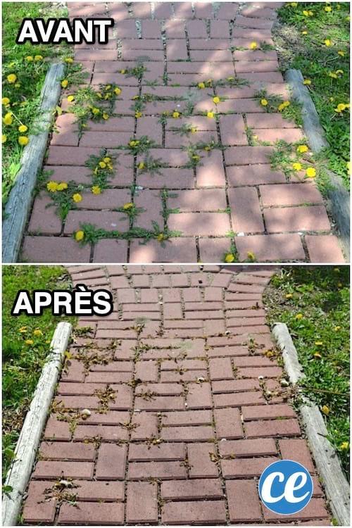 قاتل الأعشاب القوي والطبيعي لإزالة الأعشاب الضارة بين بلاط الفناء