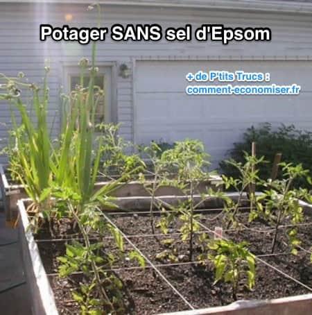 مثال آخر على حديقة نباتية بدون استخدام ملح إبسوم