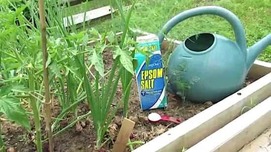 سماد ملح إبسوم لحديقة الخضروات
