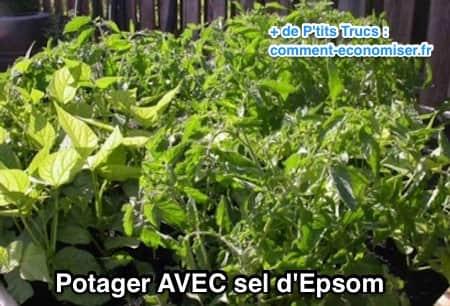 مثال على حديقة نباتية بملح إبسوم
