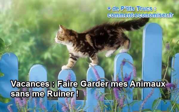 قطة تمشي على سياج أزرق