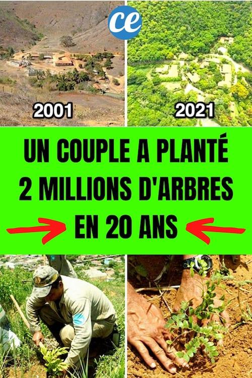 إعادة تشجير الغابة في البرازيل قبل عام 2001 وبعدها في عام 2019