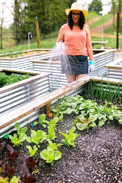 لا تنس توفير صنبور في مكان قريب قبل تركيب حديقتك النباتية المرتفعة.