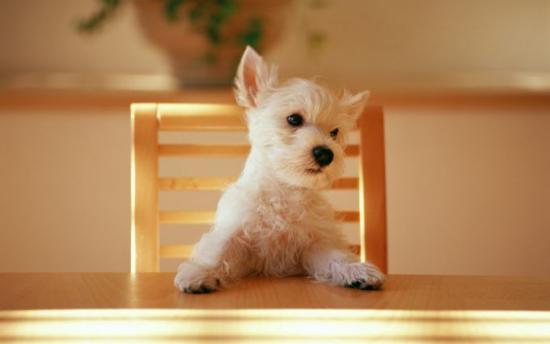 كلب يجلس على طاولة تشبه الثلج