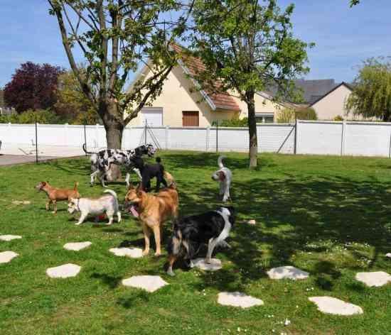 كلاب تلعب في الحديقة