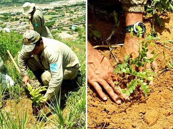 رجل يزرع شجرة تنبت