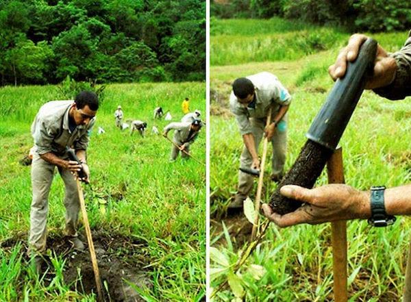الرجال يحفرون الأرض لإعادة زرع براعم الأشجار