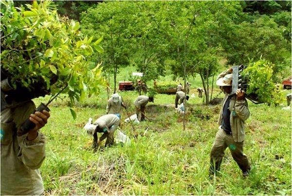 يحمل الرجال أشجارًا صغيرة لإعادة زراعتها
