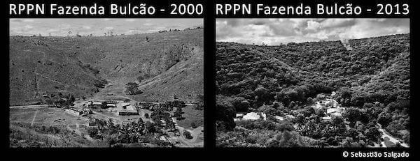 تم تدمير غابات الأمازون المطيرة في عام 2000 وأعيد زرعها في عام 2013