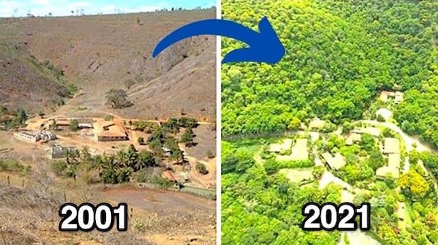 أرض سبستيو سالغادو بدون أشجار عام 2001 ثم بأشجار عام 2019