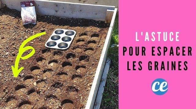 نصيحة البستاني لتوزيع البذور بشكل مثالي في الحديقة.