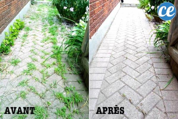 مسار حديقة مع وبعد استخدام مبيد الحشائش الطبيعي.