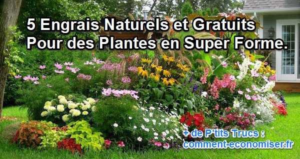 استخدم الأسمدة الطبيعية والمجانية لنباتاتك