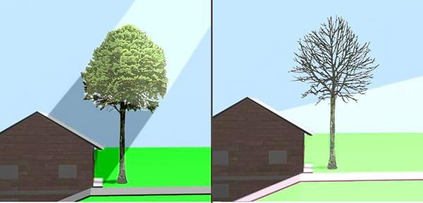 زراعة الأشجار والنباتات حول الواجهات توفر الظل للمنازل