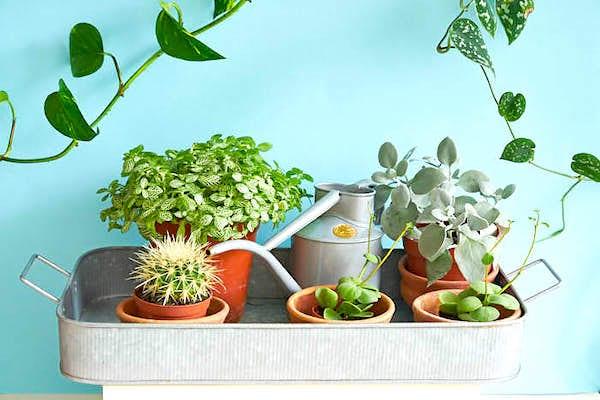اغمر نباتاتك في دلو أو في حوض مملوء بالماء.