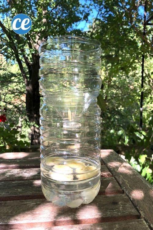 مصيدة ذباب محلية الصنع بزجاجة