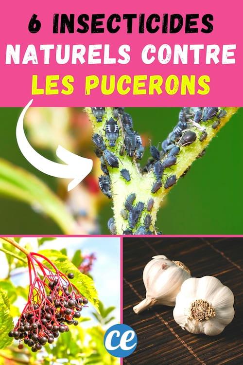 مبيد حشري طبيعي: 6 وصفات سهلة للتخلص من حشرات المن.
