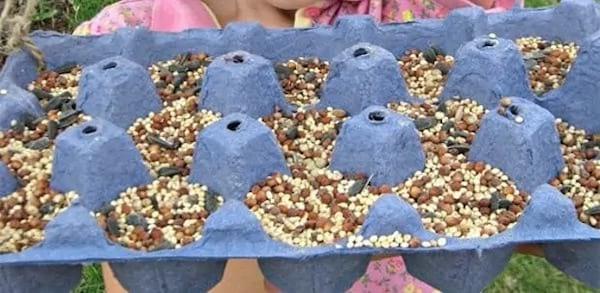 طعام الطيور في علبة البيض