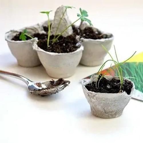 الزهور الصغيرة في قطع من علبة البيض