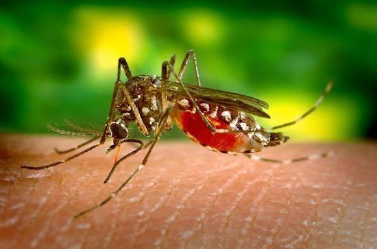 هل تعلم أن الكينين له خصائص مضادة للملاريا؟