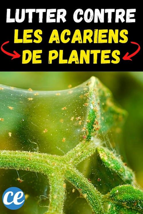 7 علاجات طبيعية وفعالة لعث النبات
