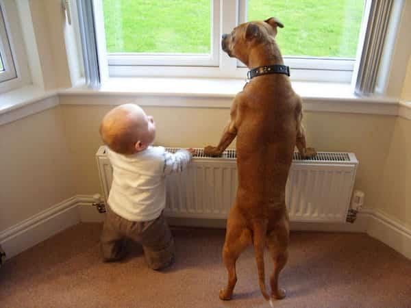 طفل وكلبه ينظران من النافذة