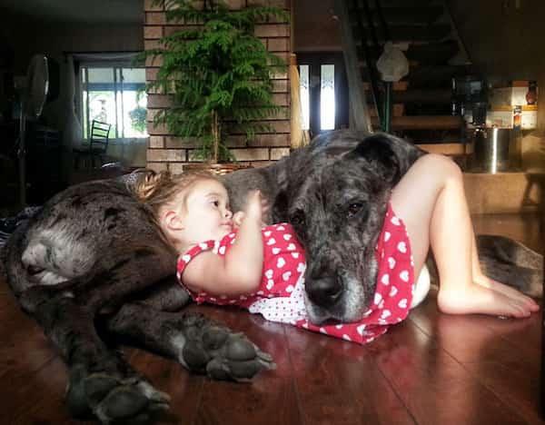 فتاة صغيرة تحتضن كلبها الكبير