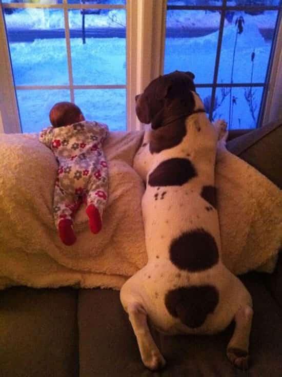 كلب كبير وطفل ينظران من النافذة