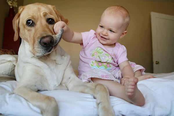 طفل يرفع شفتي كلبه الكبير