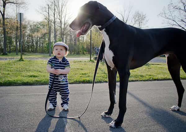 طفل يحمل مقود كلبه الكبير