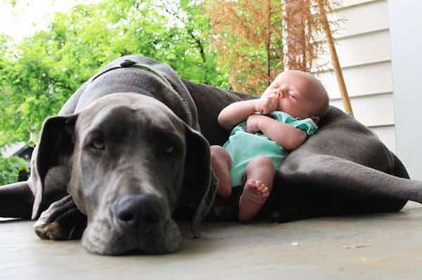 طفل ينام على كلبه الكبير