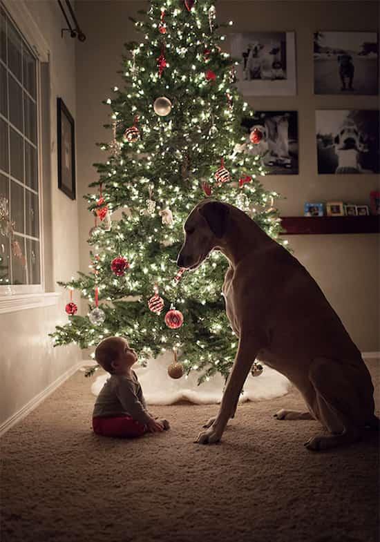 طفل مع كلبه الكبير أمام شجرة عيد الميلاد