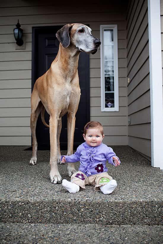 طفل يجلس بجانب كلب واقف كبير