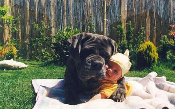 طفل يضحك بين كفوف كلب كبير